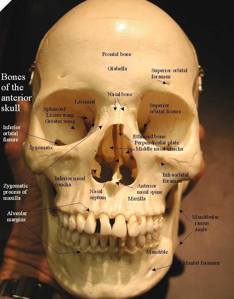 zygomatico orbital foramen